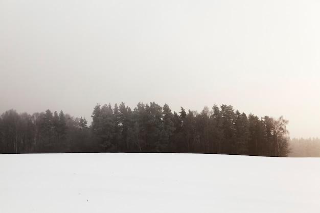 Bäume, die im winter nach einem schneesturm fotografiert wurden, sind mit schnee, feld und wald bedeckt