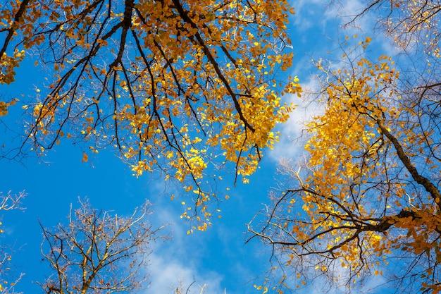 Bäume draufsicht von unten nach oben