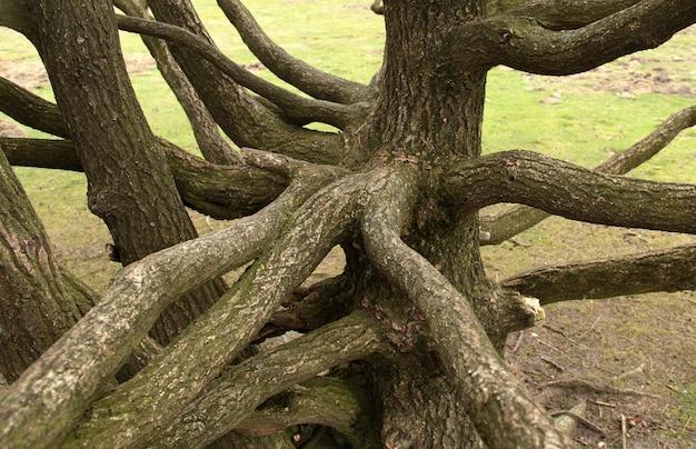 Bäume im amsterdamer wald