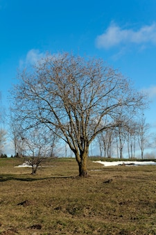 Bäume im frühling - die bäume in einer frühlingssaison grafisch dargestellt. frühlingsanfang