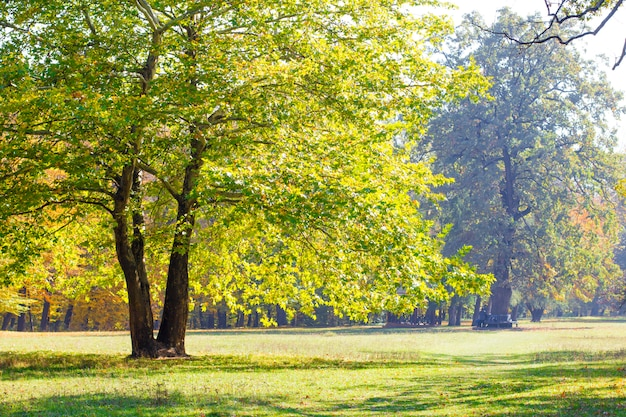 Bäume im herbstpark.