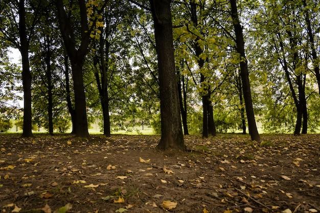 Bäume im herbststadtpark