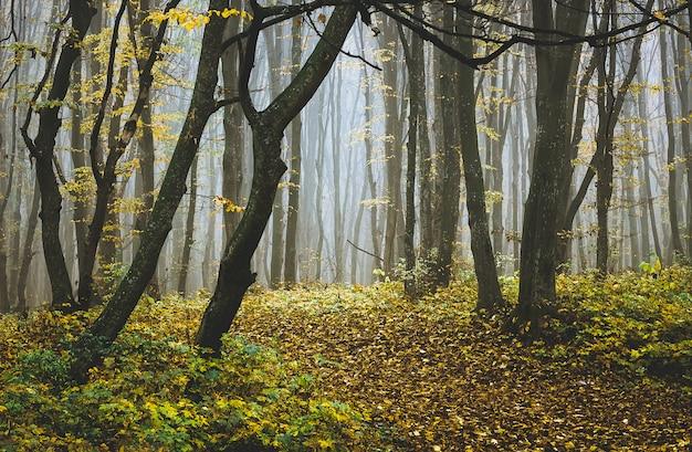 Bäume im herbstwald am nebligen morgen