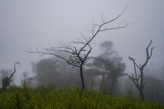 Bäume im nebelhaften wald am morgen, schöne naturlandschaften