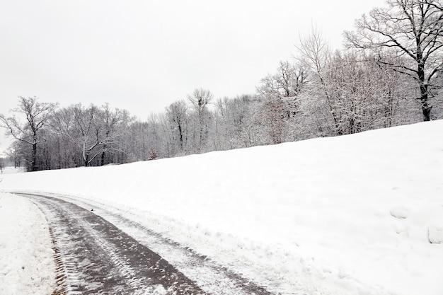 Bäume im park im winter. der boden ist mit schnee bedeckt.
