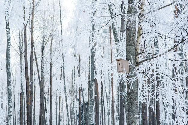 Bäume im schnee und frost. vogelhaus auf einem baum.