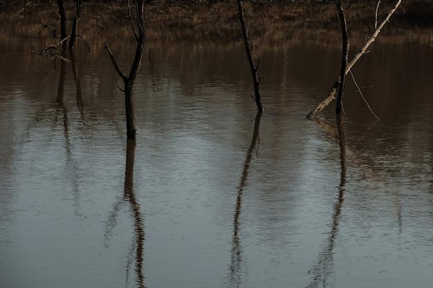 Bäume im wasser während der flut des flusses