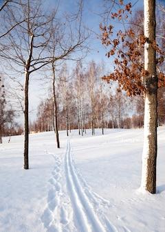 Bäume im winter - die schneebedeckten bäume, die in einer wintersaison wachsen