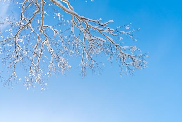 Bäume im winter mit schnee bedeckt