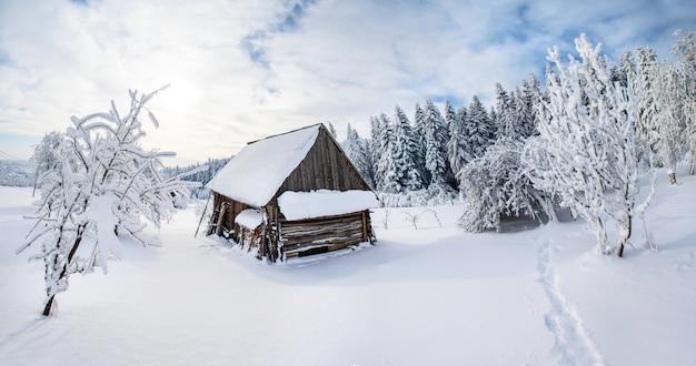 Bäume im winter
