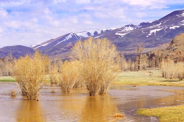 Bäume in den gewässern des flusses nackte pflanzen im frühjahr bei hochwasser am fluss chuya