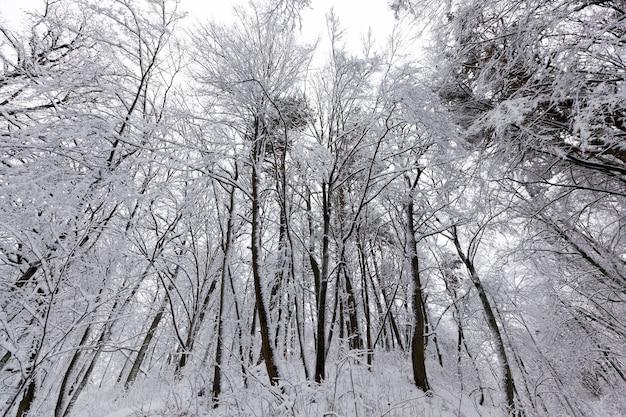 Bäume in der wintersaison auf dem territorium des parks
