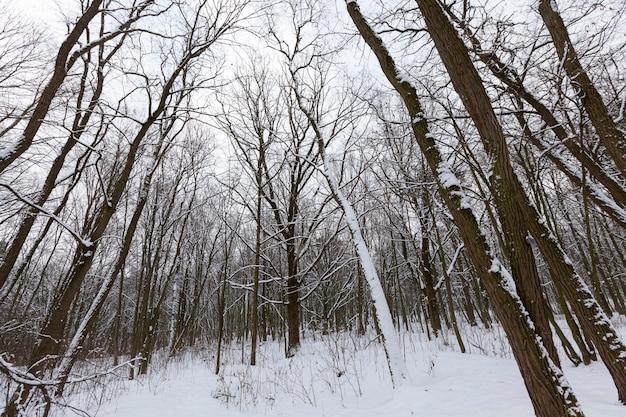 Bäume in der wintersaison