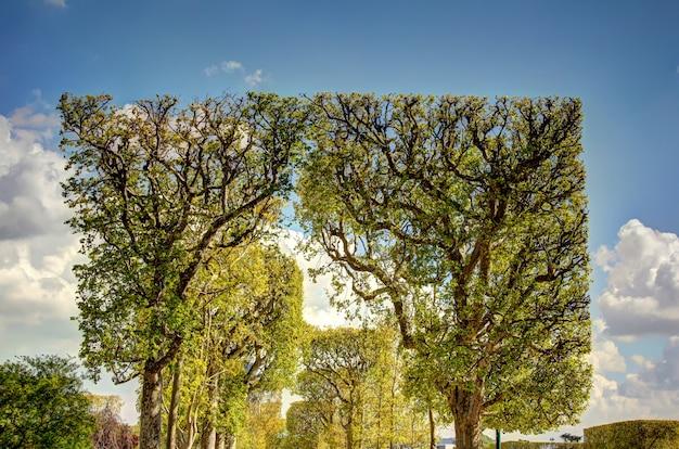 Bäume in paris
