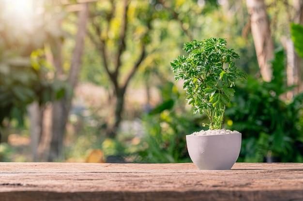 Bäume in töpfe pflanzen. konzept der liebespflanzen. liebe die umwelt.