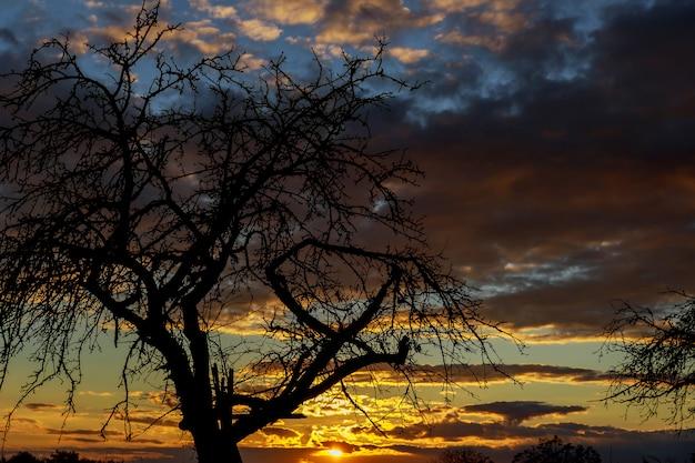 Bäume länger leben. tod bei sonnenuntergang.