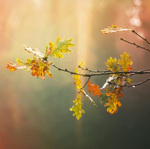Bäume mit bunten blättern in der natur in der herbstsaison