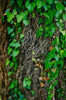 Bäume mit efeu textur von wildpflanzen überwachsen
