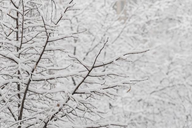 Bäume mit schnee im winterpark. schneetag, bewölkter himmel.