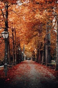 Bäume neben lichtmasten