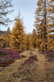 Bäume nebeneinander in einem wald mit trockenen gelben blättern