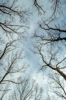 Bäume ohne blätter und blauen himmel Premium Fotos