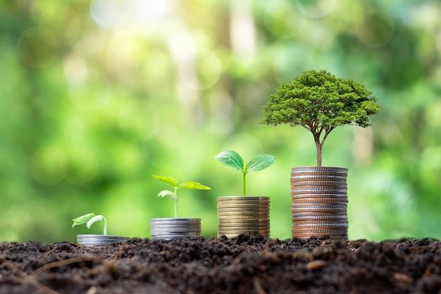 Bäume pflanzen und entwickeln auf münzhaufen sowie grüne natur. konzept des finanz- und wirtschaftswachstums.
