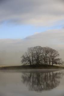 Bäume reflektiert