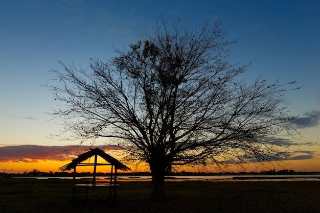 Bäume schwarze morgendämmerung