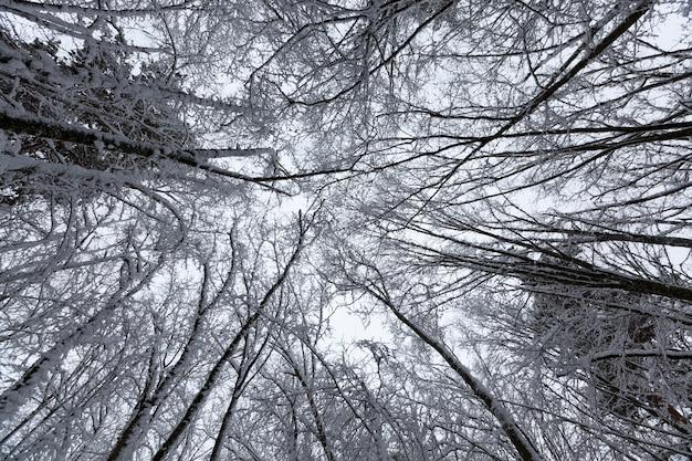 Bäume sind mit schnee bedeckt