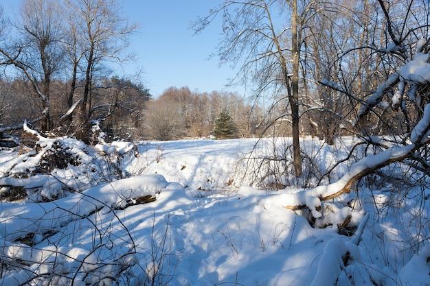Bäume und andere pflanzen im winter