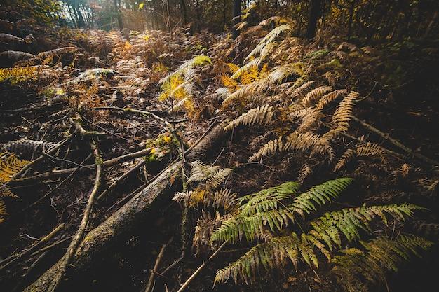 Bäume und büsche bedecken im herbst den boden eines waldes unter sonnenlicht