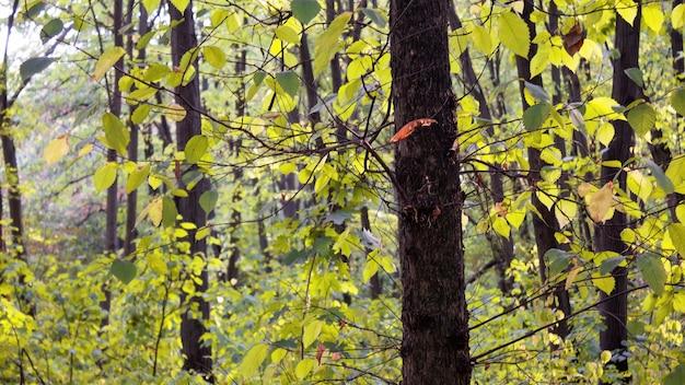 Bäume und büsche mit grünen blättern in einem wald in chisinau, moldawien