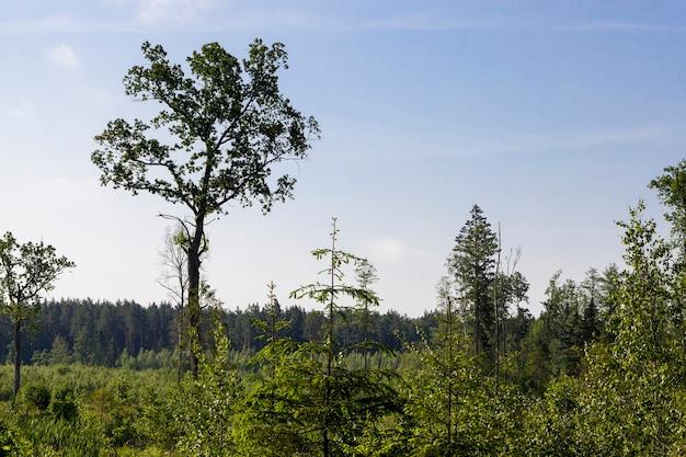 Bäume und gras
