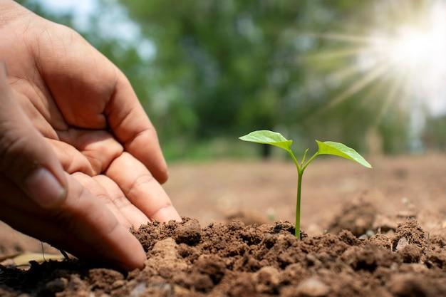 Bäume und menschliche hände, die bäume im bodenkonzept der wiederaufforstung und des umweltschutzes pflanzen.