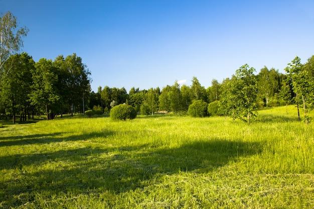 Bäume und sträucher, die im frühjahr in einem stadtpark wachsen