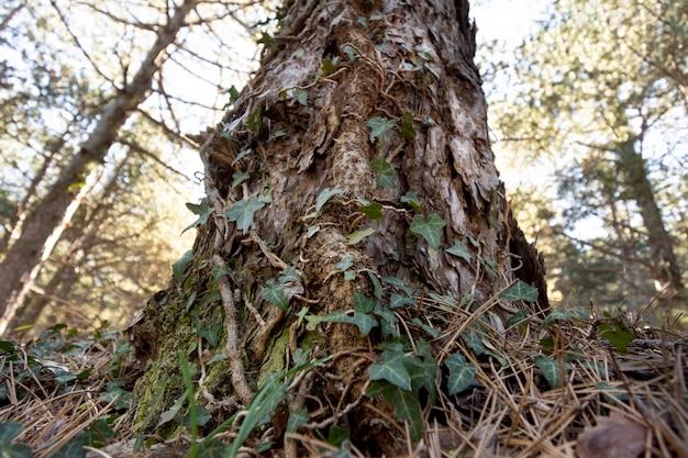 Bäume und waldhintergründe
