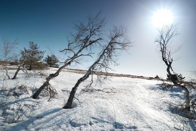 Bäume unter schnee mit sonnenscheinstern
