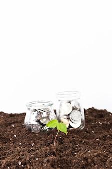 Bäume wachsen auf münzen