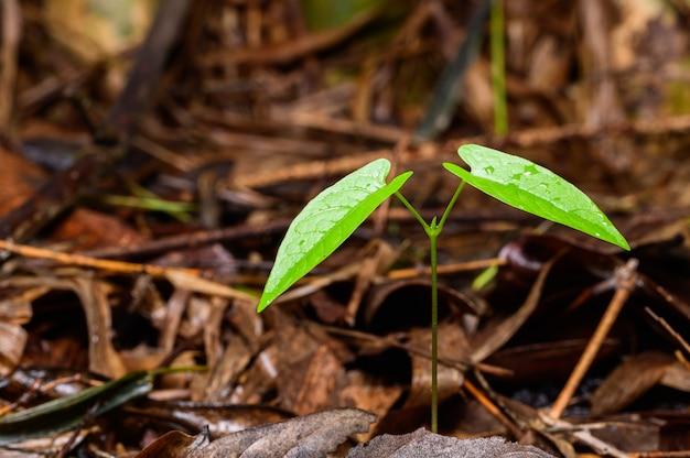 Bäume wachsen im natürlichen wald