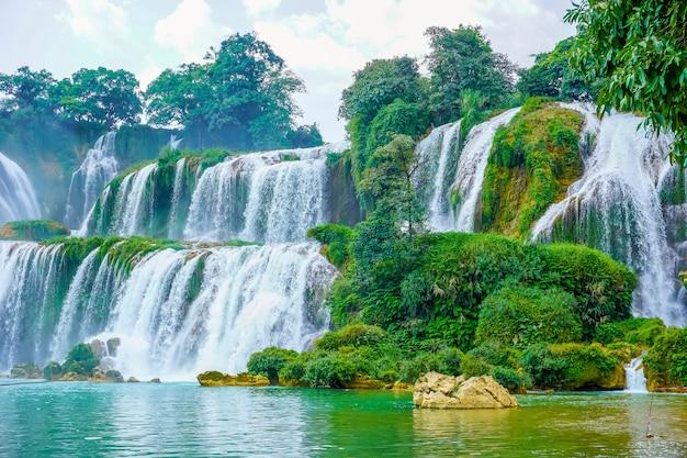 Bäume wilde fälle asiatischen saigon berühmt