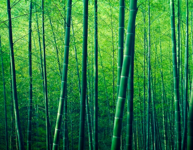 Bambus forest trees nature concept