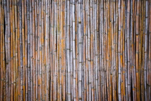 Bambus vertikal