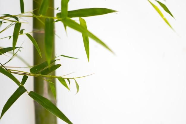 Bambusbaum mit blattdekorationspostkartenart