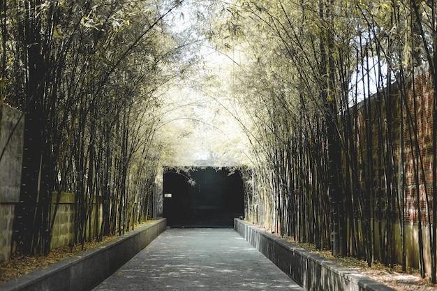 Bambusbaum tunnel & gehweg weg straße