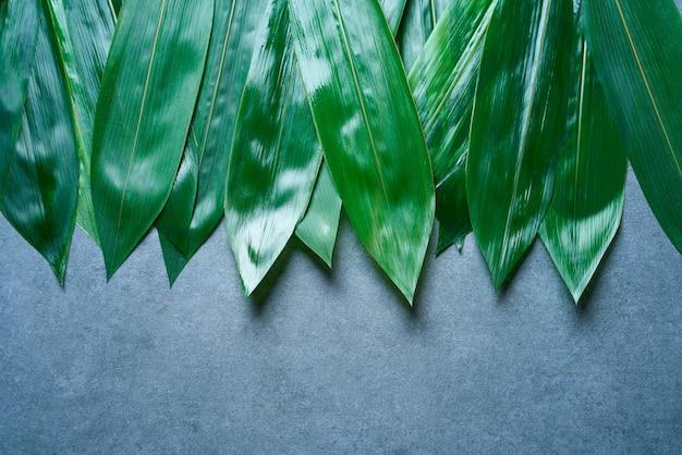 Bambusblätter in folge auf grau