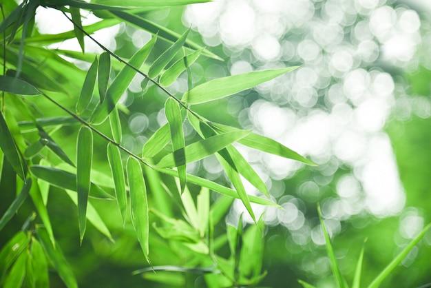 Bambusblatt und abstrakter grüner hintergrund bokeh.blured hintergrund, selektiver fokus