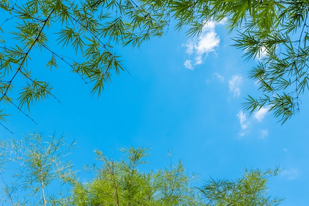 Bambusblattrahmen auf hintergrund des blauen himmels. platz kopieren