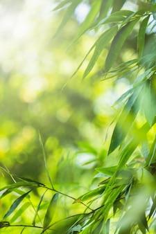 Bambusgrüne farbe in der natur mit kopienraum. bambusblatt und kopienraum.