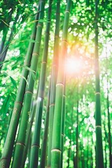 Bambushain, bambuswaldnatürliches grün